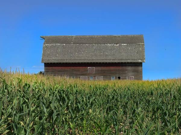 Wall Art - Photograph - Barn In The Corn Field by Michelle McCallum