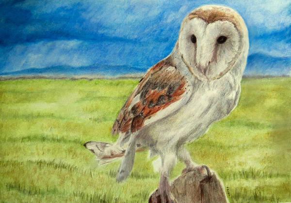Barley Painting - Barn Owl And Barley by Pamela Ruddy