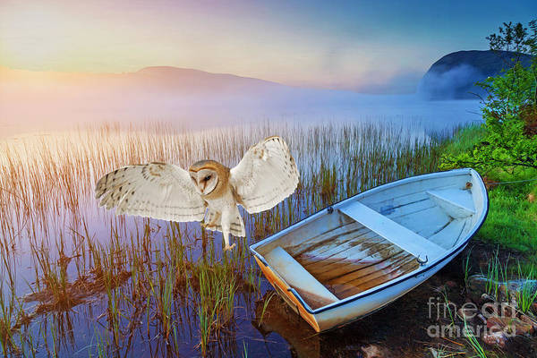 Wingspan Photograph - Barn Owl And Boat by Laura D Young