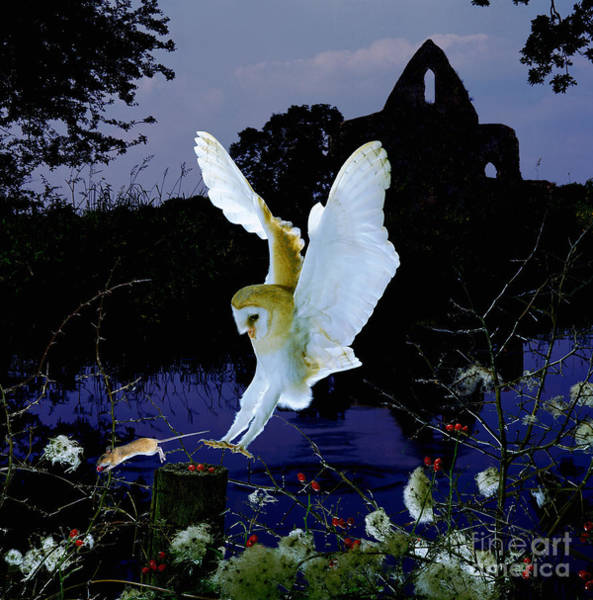 Photograph - Barn Owl And Church By A River by Warren Photographic