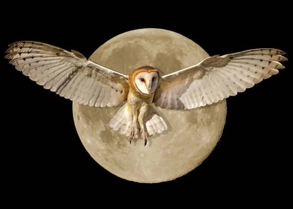 Wall Art - Photograph - Barn Owl And Supermoon Composite by Dawn Key