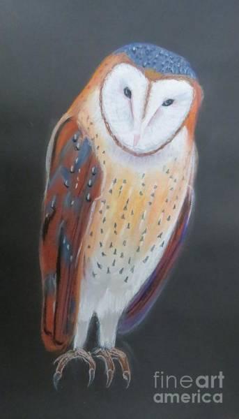 Rust Drawing - Barn Owl by Evie Hanlon