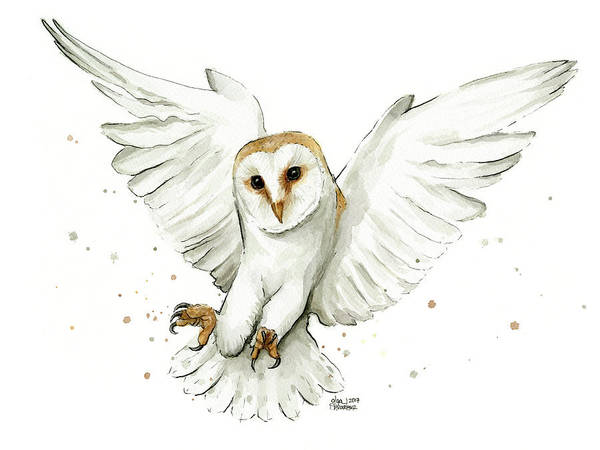 Nocturnal Wall Art - Painting - Barn Owl Flying Watercolor by Olga Shvartsur