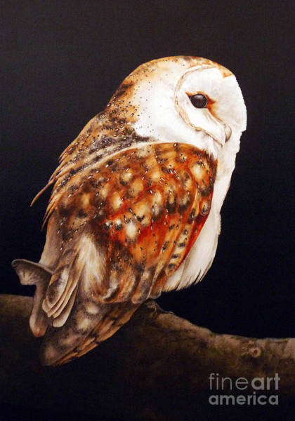 Barn Owl Painting - Barn Owl II by Marie Burke