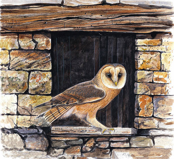 Barn Owl Painting - Barn Owl In An Old Crete Barn by Dag Peterson