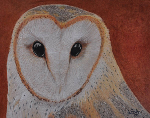 Drawing - Barn Owl by Jo Baner