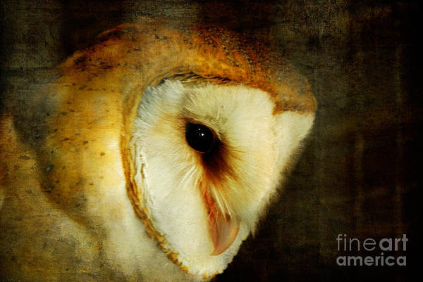 Wall Art -  - Barn Owl by Lois Bryan
