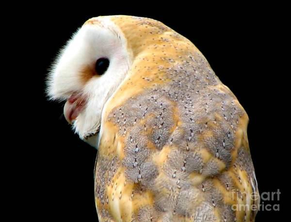 Hawk Creek Photograph - Barn Owl by Rose Santuci-Sofranko
