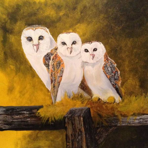 Barn Owl Painting - Barn Owls by Tim Loughner