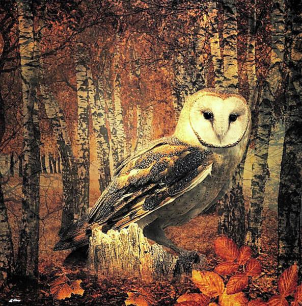 Fall Scenery Mixed Media - Barn Owl by G Berry