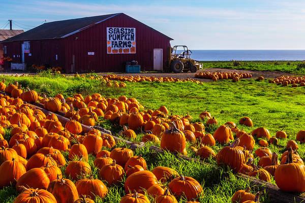 Wall Art - Photograph - Barn Seaside Pumpkin Farms by Garry Gay