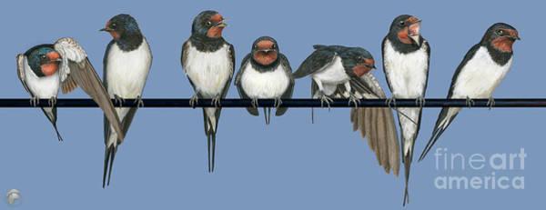 Painting - Barn Swallow-hirundo Rustica-rauchschwalbe-boerenzwaluw -ladusvala-hirondelle Rustique-golondrina by Urft Valley Art