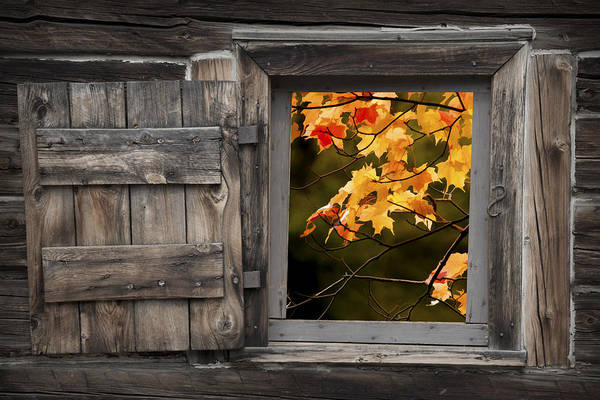 Photograph - Barn Window With Colorful Fall Leaves by Randall Nyhof