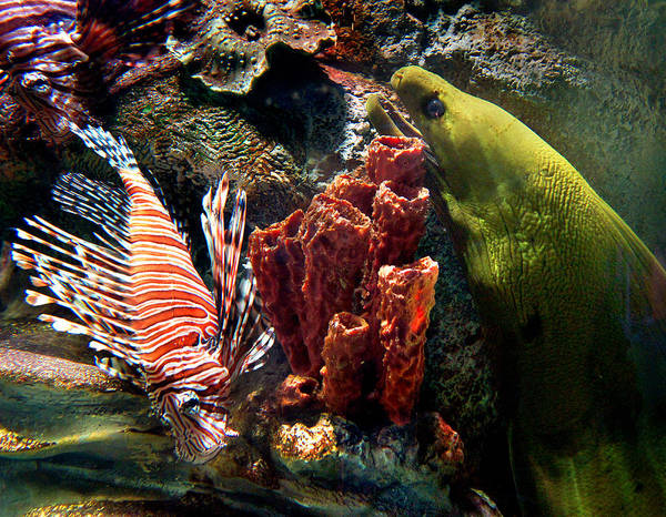 Eels Photograph - Barnacle Buddies by Bill Pevlor
