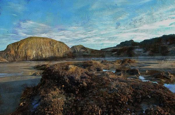 Photograph - Barnacles On The Beach by Thom Zehrfeld