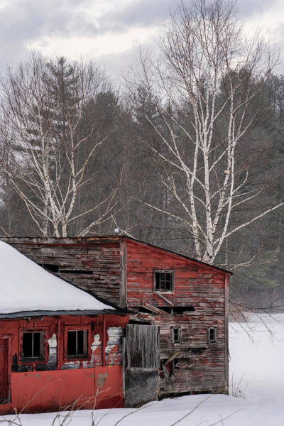 Photograph - Barns And Birches by Tom Singleton