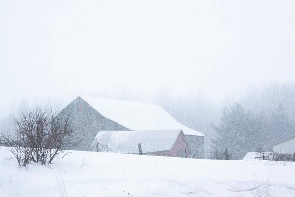 Photograph - Barns In The Snow by Tatiana Travelways