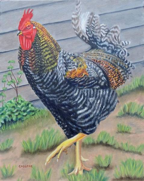Painting - Barnyard King by Jill Ciccone Pike