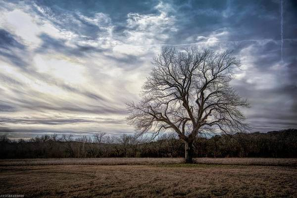 Photograph - Baron Tree Of Winter by Gaylon Yancy
