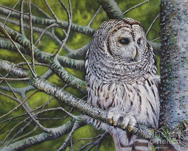 Painting - Barred Owl by Greg and Linda Halom