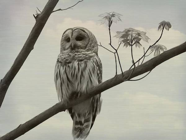 Sleep Mixed Media - Barred Owl On A Tree by Dan Sproul