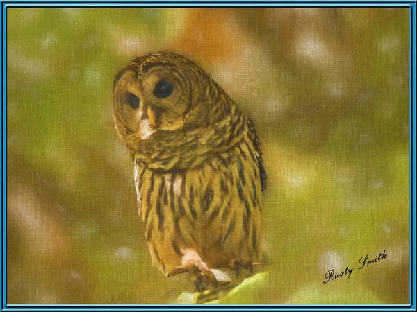 Digital Art - Barred Owl Portrait by Rusty R Smith
