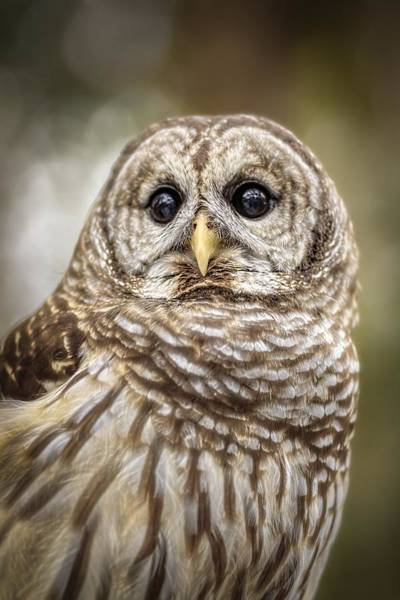 Photograph - Hoot by Steven Sparks