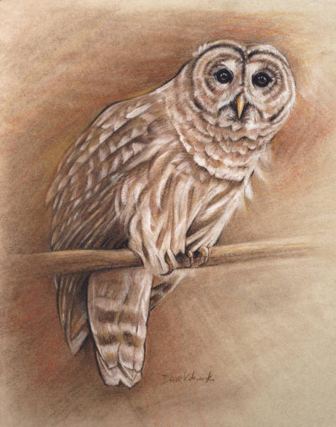 Owl Drawing - Barred Owl - Wildlife Drawing by Dave Kobrenski