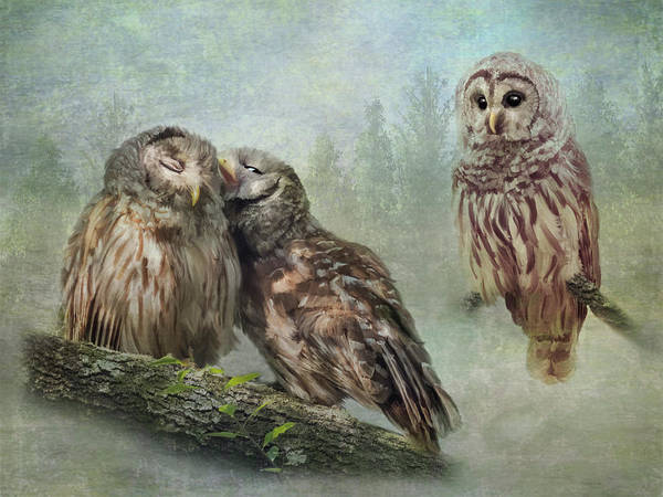 Photograph - Barred Owls - Steal A Kiss by Patti Deters
