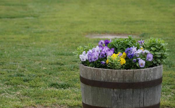 Photograph - Barrel Of Flowers by Chris Alberding