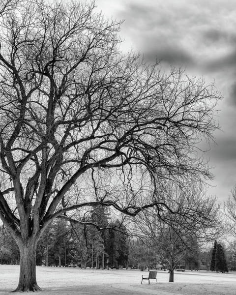 Photograph - Winter In Cheesman Park, Denver, Co Empty Trees And Empty Benches by Philip Rodgers