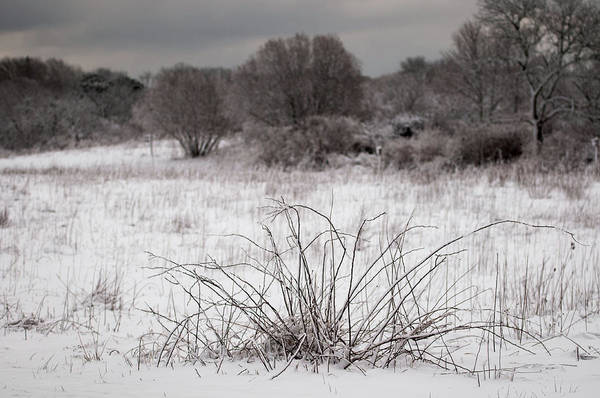 Photograph - Barren by John Whitmarsh