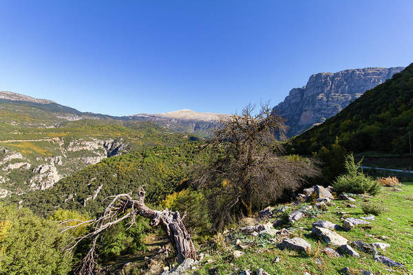 Stone Wall Art - Photograph - Barren Trees And Vikos Gorge by Iordanis Pallikaras