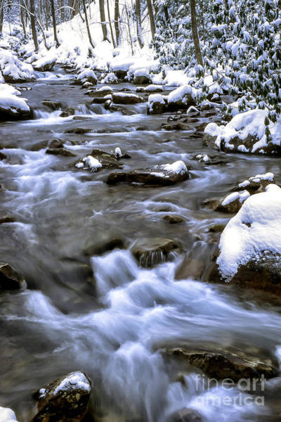 Photograph - Barrenshe Run In Snow by Thomas R Fletcher
