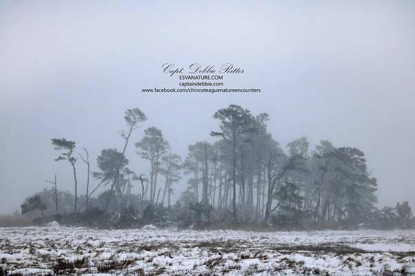 Photograph - Barrier Island Under Snow by Captain Debbie Ritter