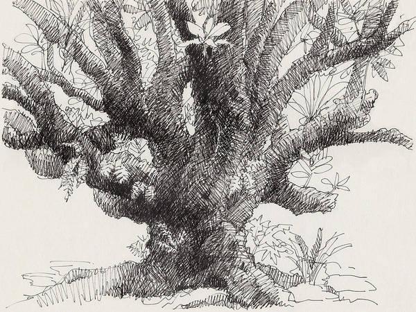 Barringtonia Tree Art Print