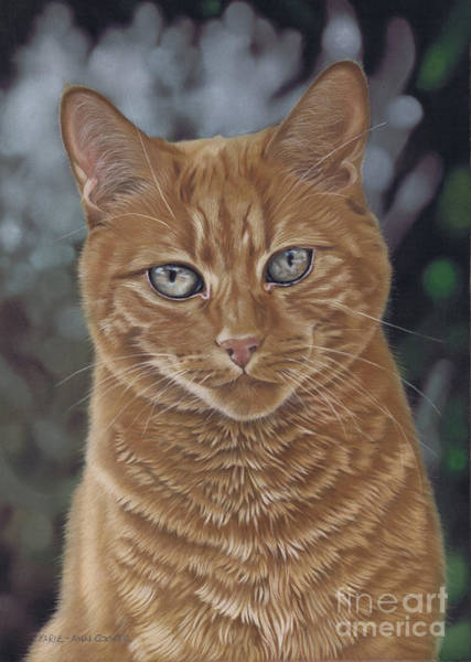 Pastel - Barry The Cat by Karie-ann Cooper