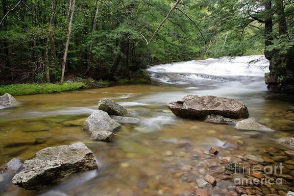 Photograph - Bartlett Experimental Forest - Bartlett New Hampshire Usa by Erin Paul Donovan