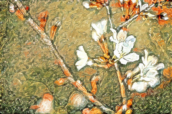 Photograph - Bartlett Pear Spring Blooms by Susan Maxwell Schmidt