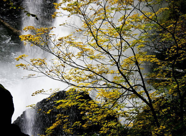 Photograph - Base Of The Falls. by Albert Seger