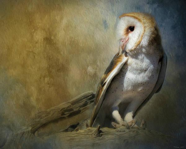 Bashful Barn Owl Art Print
