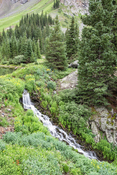 Photograph - Basin Falls In Spring by Denise Bush