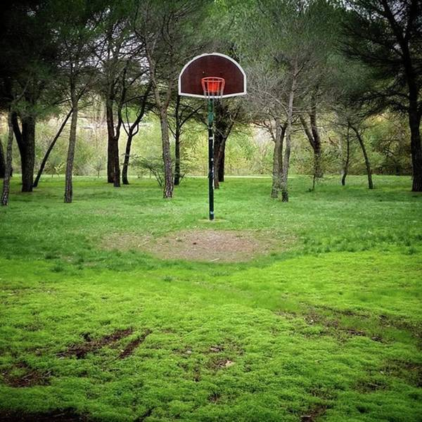 Wall Art - Photograph - Basket Bosque #landscape #basket by Rafa Rivas