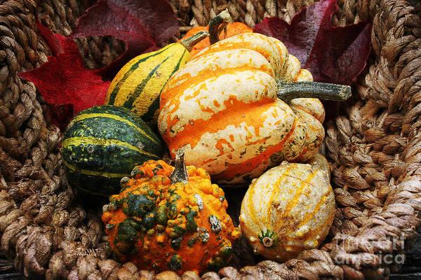 Photograph - Basket Of Pumpkins by Jutta Maria Pusl