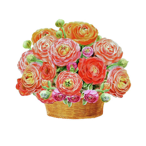 Painting - Basket With Ranunculus Flowers Watercolor by Irina Sztukowski