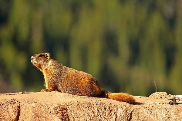 Photograph - Basking In The Summer Sun by Adam Jewell