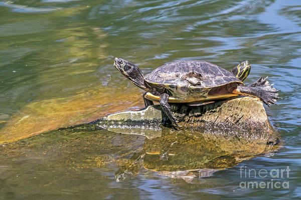 Photograph - Basking by Kate Brown