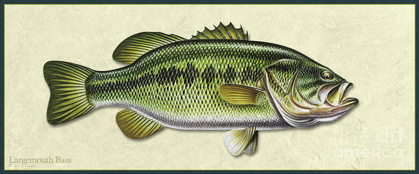 Painting - Bass Id by Jon Q Wright