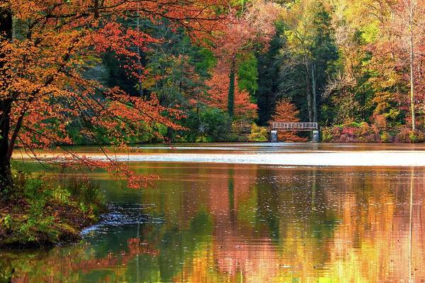 Photograph - Pond In Autumn by Carol Montoya