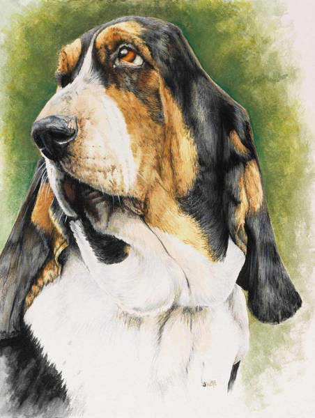 Painting - Basset Hound In Watercolor by Barbara Keith